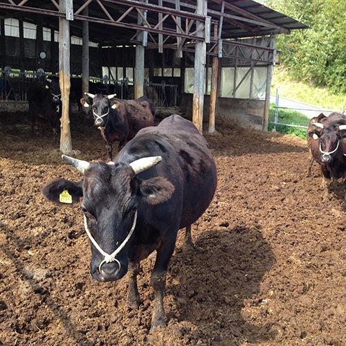 登米の畜産業イメージ画像
